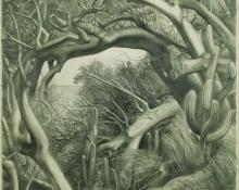 "Ross Eugene Braught, ""Tropical Shore (Marina Cay, British Virgin Islands)"", graphite on paper, 1947"
