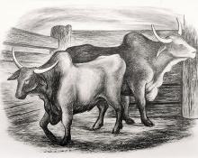 "Ethel Magafan, ""Untitled (Steer)"", lithograph, c. 1938"